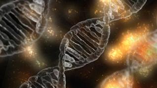 Los interruptores epigenéticos artificiales pueden ayudar a la comprensión de la expresión génica