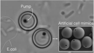 Las células artificiales mimetizan las funciones vitales de las células