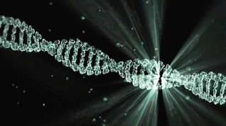 El ADN basura podría ser increíblemente útil para la biocomputación
