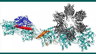 Explorando las moléculas de la memoria