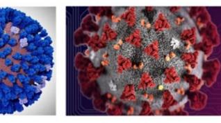 Bioinformática: Las supercomputadoras están preparando un modelo masivo del coronavirus