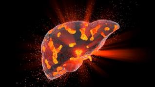 Modelo 3D de hígado humano para un mejor diagnóstico