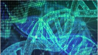 Las estructuras inusuales del ADN tienen importancia funcional