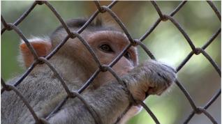 La amenaza a la vida silvestre generan riesgos de sufrir el contagio de virus en los seres humanos