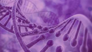 """Mirar el ADN """"basura"""" para obtener información sobre el TEA y el accidente cerebrovascular"""