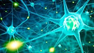 """¿La neurona Jennifer Aniston? Un estudio respalda la existencia de neuronas """"conceptuales"""""""