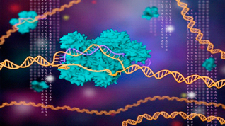 CRISPR: la herramienta de edición genética cada vez más afilada