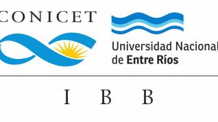 Plazas en FIUNER e IBB para realizar Doctorados y Postdoc - Convocatoria CONICET