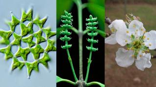 Secuencias génicas arrojan luz sobre más de mil millones de años de evolución de las plantas verdes