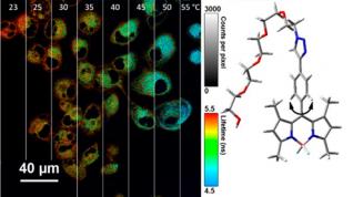 Nanotermómetro que registra la temperatura dentro de las células
