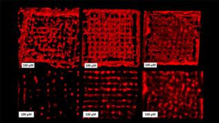 Desarrollaron un proceso de bioimpresión 3D de células vivas