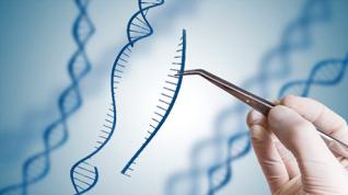 Utilizan CRISPR para corregir la mutación en el modelo de distrofia muscular de Duchenne